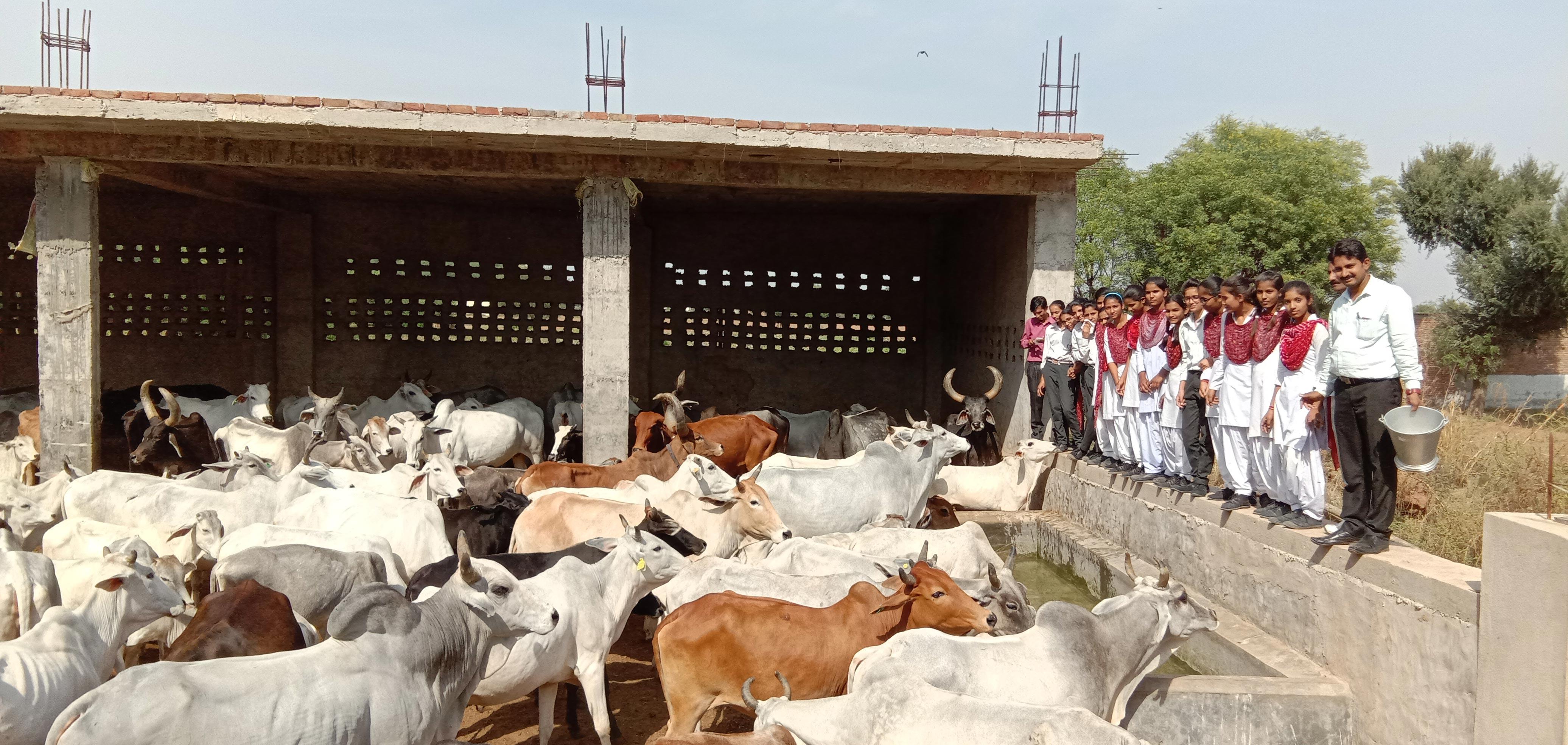 Tasing Gaushala Visit